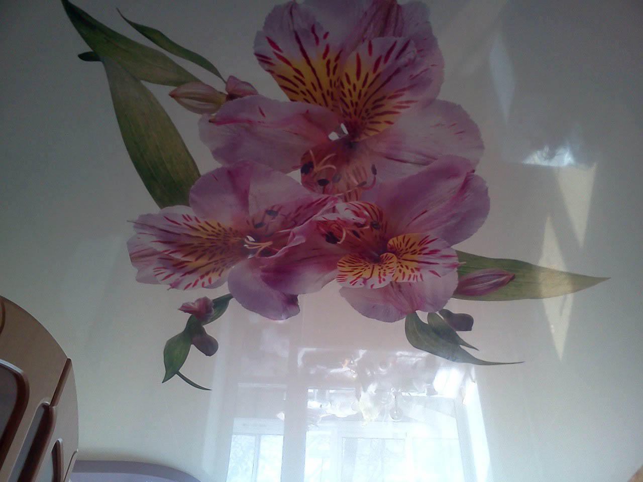 варианты картинок орхидеи для натяжных потолков нашем сайте